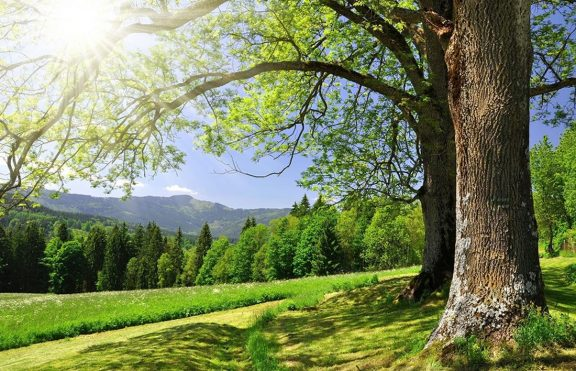 Bagaimana Alam Mempengaruhi Kesehatan Kita?