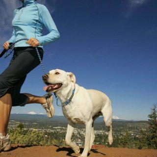 Kenapa Mempunyai Hewan Peliharaan Baik Untuk Kesehatan Anda?