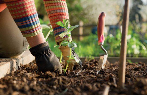 Ingin Mulai Berkebun Sendiri? Inilah Dampak Sehatnya